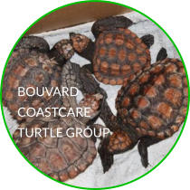 BOUVARD COASTCARE TURTLE GROUP
